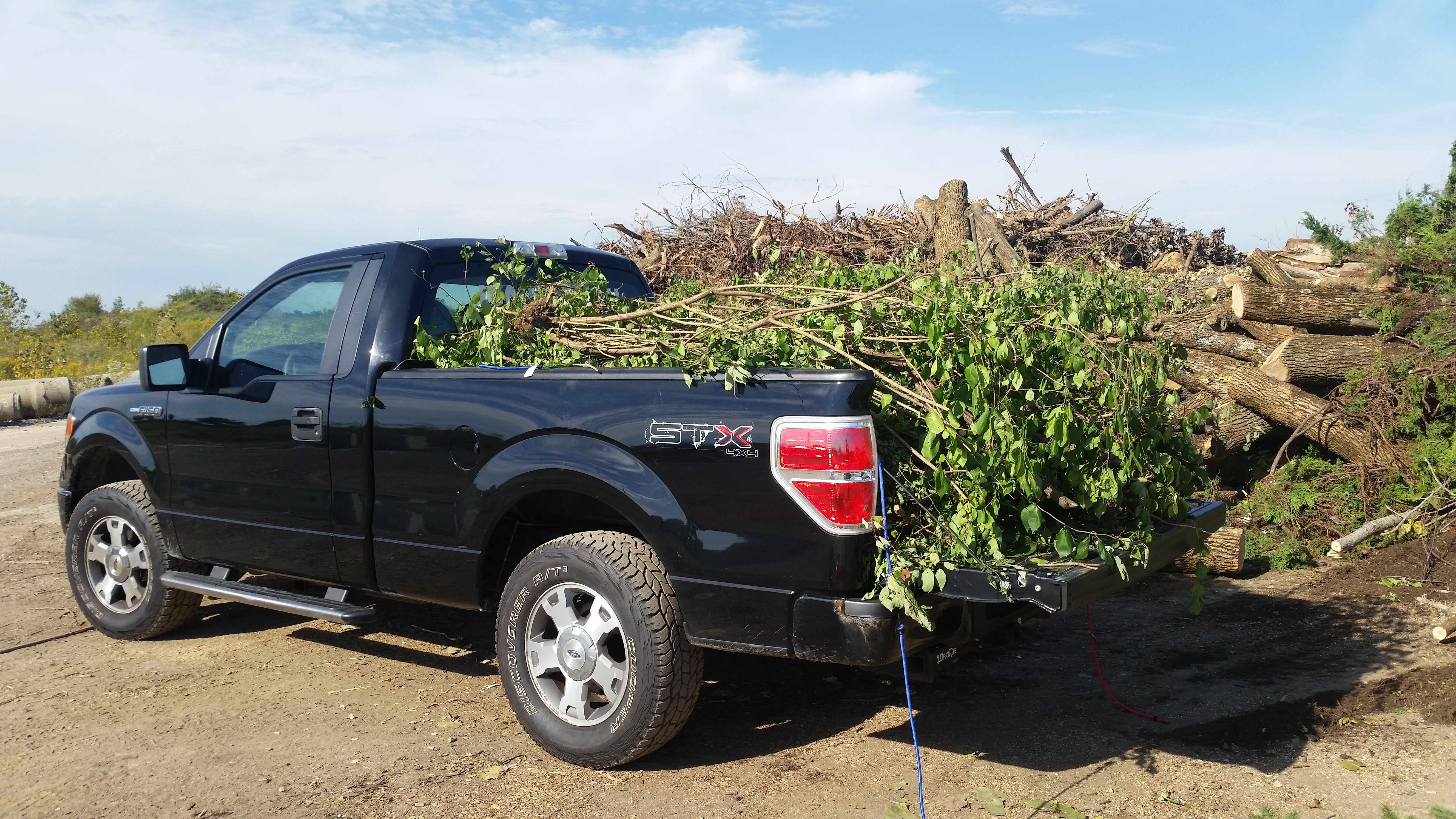 tree removal and brush hauling