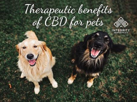Therapeutics benefits of CBD for pets. 🐶🐱🐴