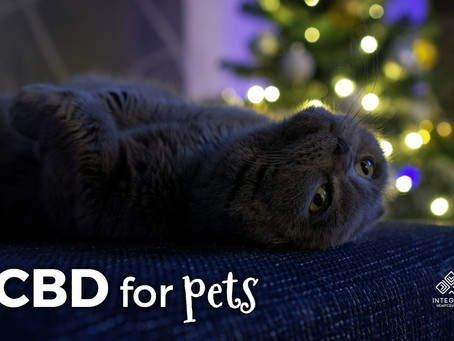 🐈 CBD Good for Pets 🐕