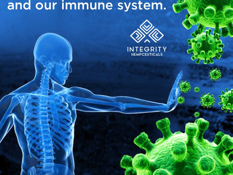 CBD oil and our immune system 🧬🧫