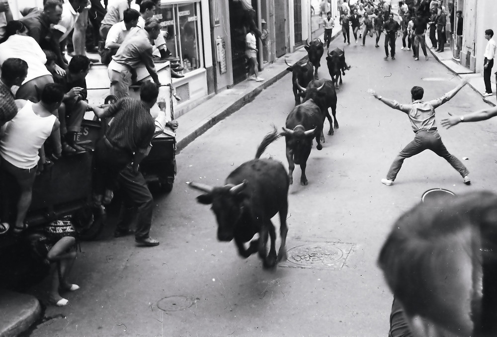 bulls charging through the street