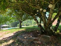 Beynac garden
