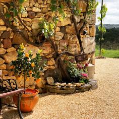 Roses and Vines around Gîte Beynac