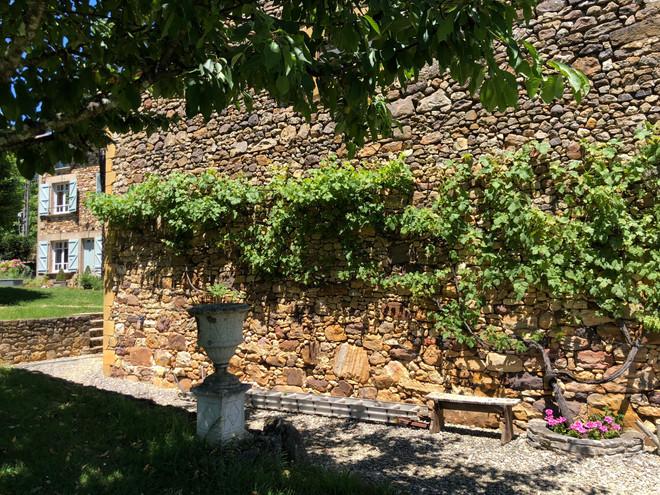 Gite Beynac vines