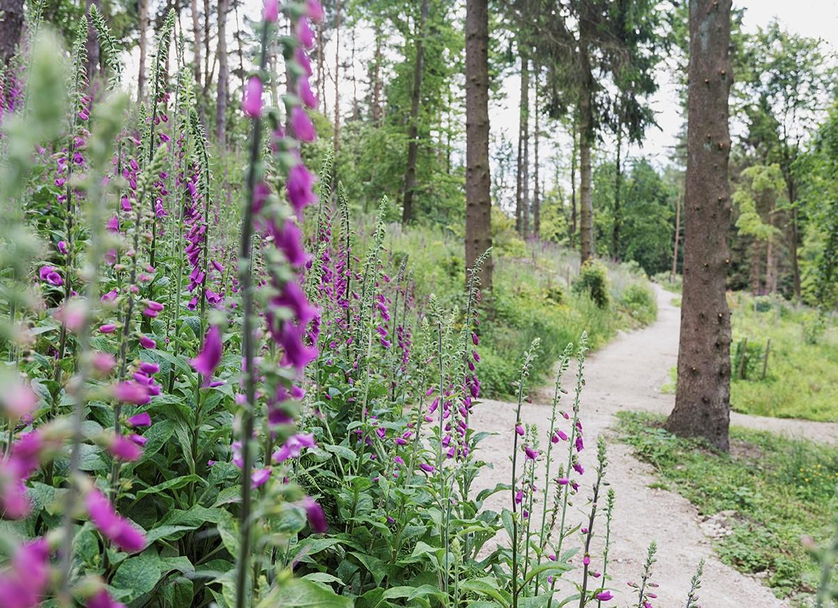 Himalayan Garden