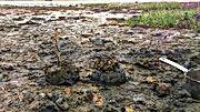 Little Bears Forest Preschool - Milton Locks - making mud pies - Hants & IoW Wildlife Trust