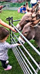 Little Bears Forest Preschool - Millers Farm visit - feeding the donkeys