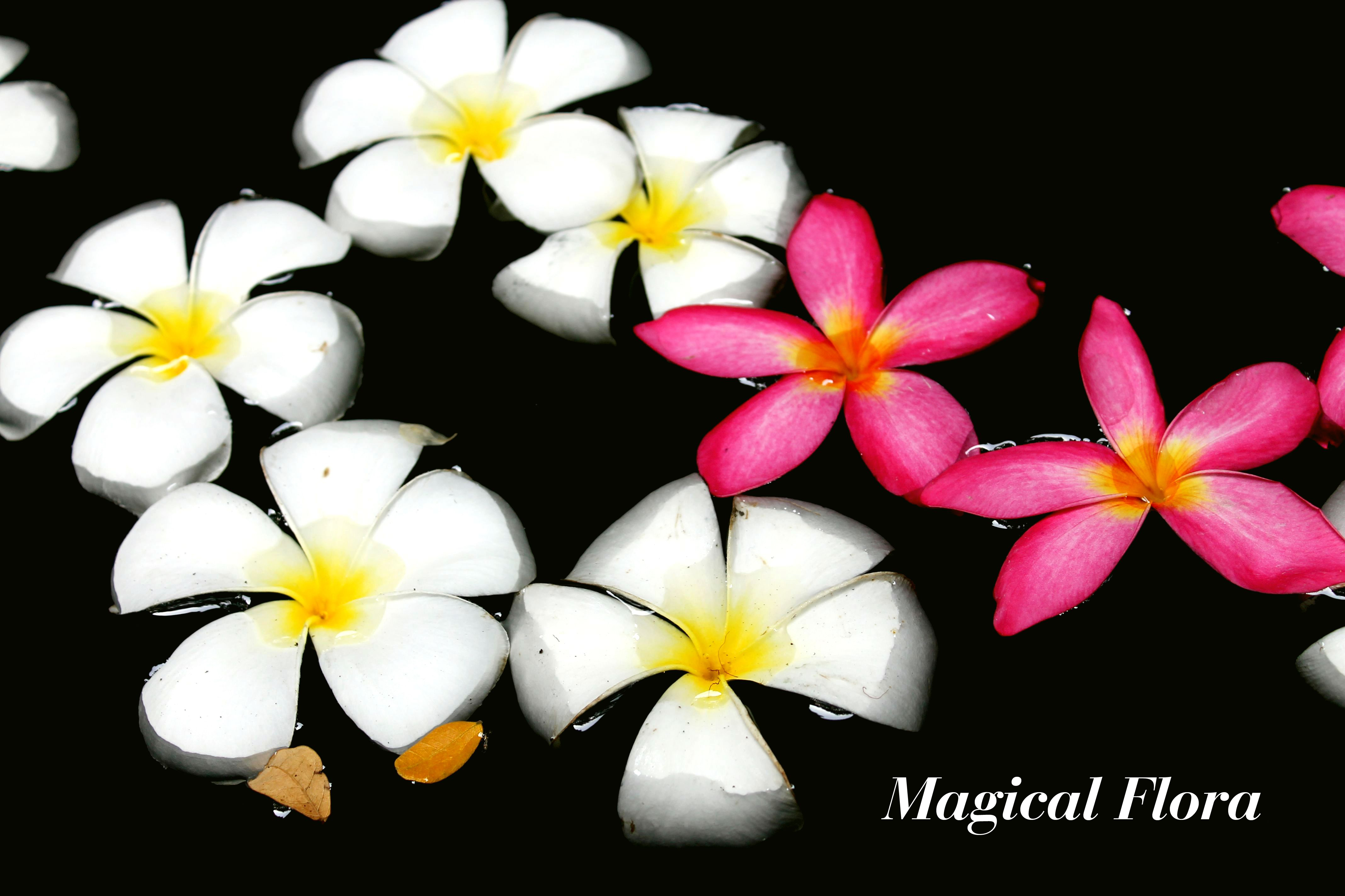 Magical Flora.JPG