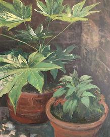 Original artwork/painting by James Decent depicting Fatsia Japonica plant