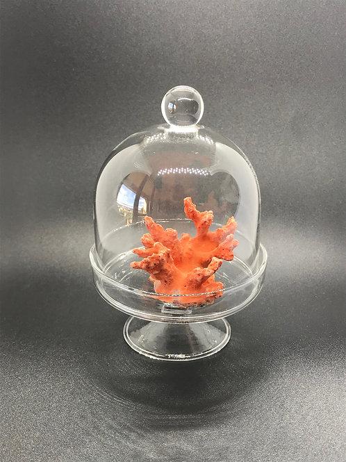 Corail Rouge Décoratif