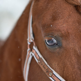 Horses WS 12.jpg