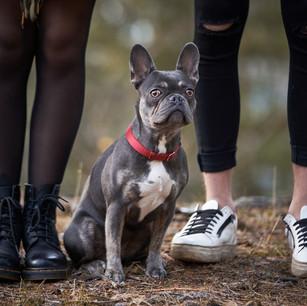 Dogs WS 31.jpg