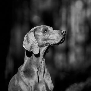 Hundefotografie 39.jpg