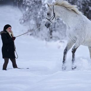 Horses WS 07.jpg