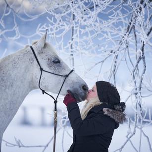 Horses WS 03.jpg