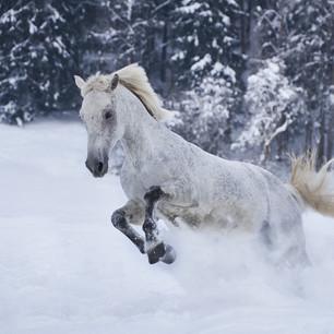 Horses WS 08.jpg