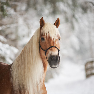 Horses WS 15.jpg