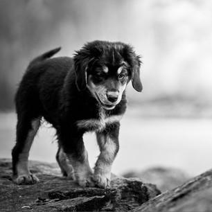 Hundefotografie 35.jpg