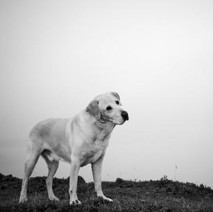 Dogs WS 24.jpg