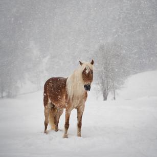 Horses WS 17.jpg