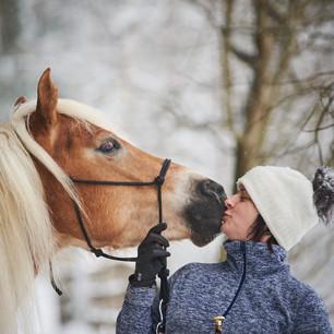 Horses WS 16.jpg