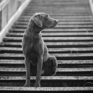 Hundefotografie 37.jpg