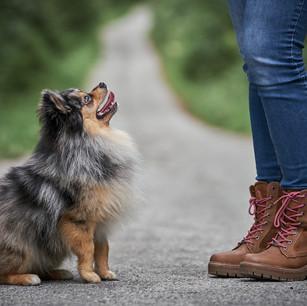 Hundefotografie 32.jpg