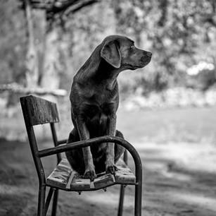 Dogs WS 12.jpg