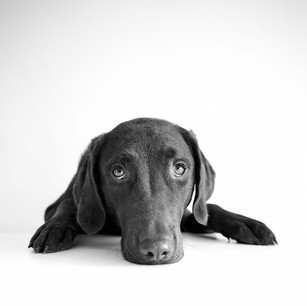 Dogs WS 39.jpg