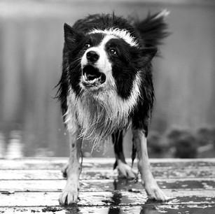 Hundefotografie 40.jpg