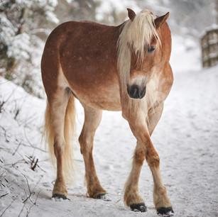 Horses WS 14.jpg