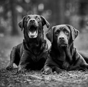 Hundefotografie 41.jpg