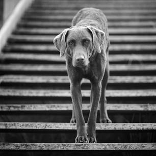 Hundefotografie 36.jpg
