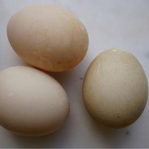 är ägg bra för magen