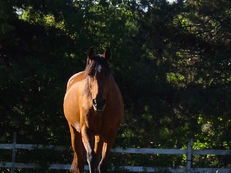 How To Care For A Senior Horse