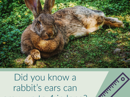 5 Fun Rabbit Facts