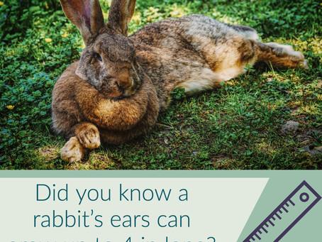 5 Fun Rabbit Facts