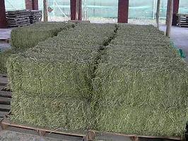 Alfalfa Delivery Snohomish, Alfalfa Delivery Woodinville, Alfalfa Delivery Mill Creek, Alfalfa Delivery Everett, Alfalfa Delivery Lake Stevens, Alfalfa Delivery Lynnwood, Alfalfa Delivery Cathcart, Alfalfa Delivery Clearview, Alfalfa Delivery Redmond, Alfalfa Delivery Bellevue, Alfalfa Delivery Seattle, Alfalfa Delivery Marysville, Alfalfa Delivery Shoreline, Alfalfa Delivery Edmonds, Alfalfa Delivery Monroe