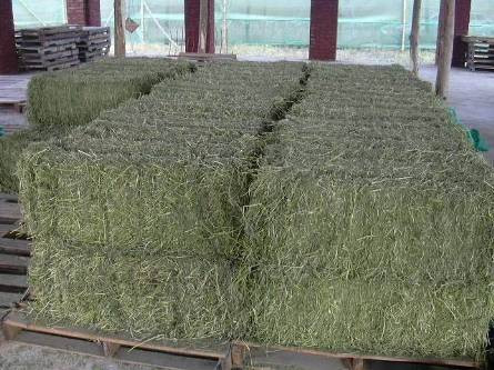 Choosing The Right Hay For You