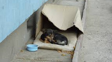 Homeless dogs, give them a chance.