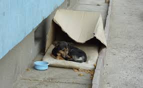 homeless dog, hungrystreets, help now, donate,hungry,