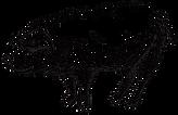 Illustrated Pig