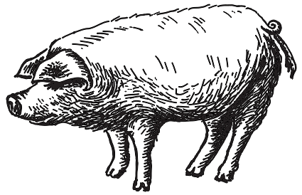 Illustrated Pig