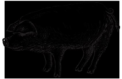 Pig Escape and Fall Prep