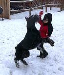 Giant schnauzer breeder, giant schnauzers, giant schnauzer breeder raw feeding, giant schnauzer puppies