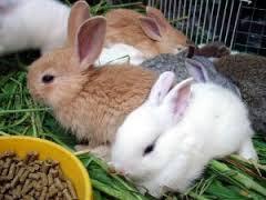 the poor bunnies #9
