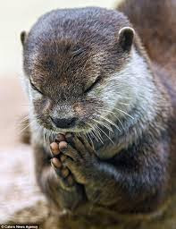 praying animal