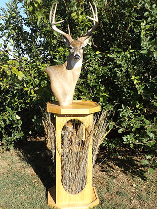Colliers Whitetail Deer