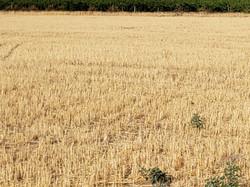Pasture Rangeland Forage