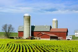Whole Farm Revenue